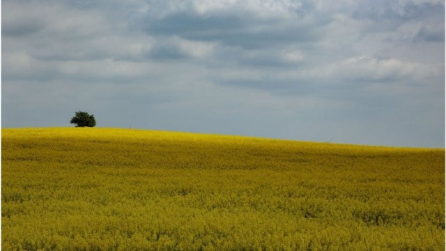 Запрет на продажу земли в Украине нарушает права собственников - решение ЕСПЧ