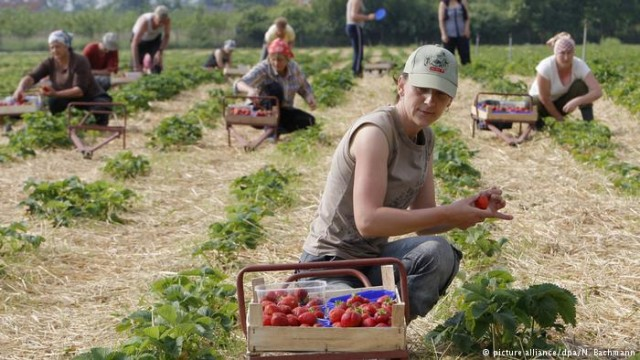 Работники из Украины: плюсы и минусы для экономики (видео)