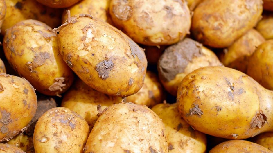 Картофель Айдахо: характеристика сорта и особенности его выращивания