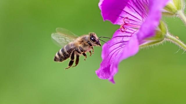 Пчелы и экономика: рыночные принципы, которым насекомые могут научить ученых
