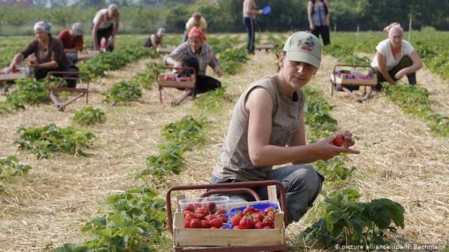 Несмотря на коронавирус ФРГ привлечет сезонных работников из Восточной Европы