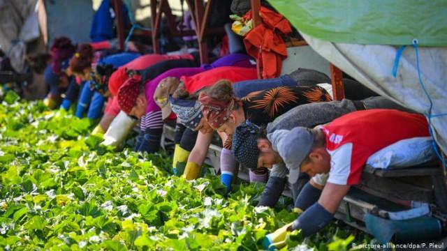 Срок въезда сезонных работников в ФРГ продлили