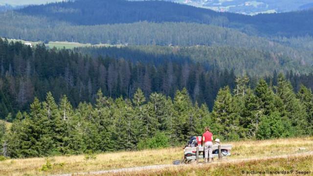 Леса в Германии: как вырубают и как ухаживают (видео)