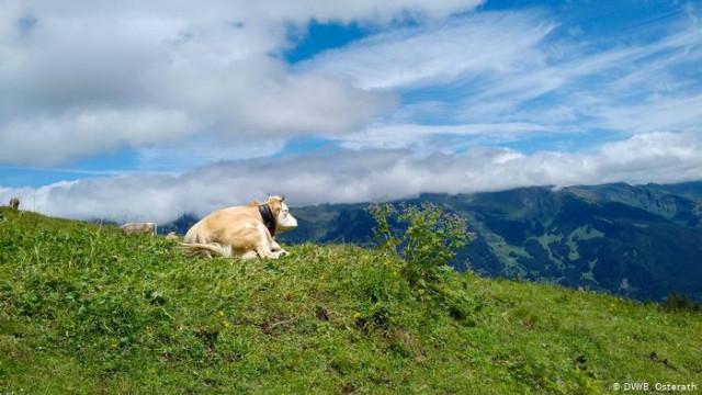 Мясо в Швейцарии: дорого - хорошо для животных?