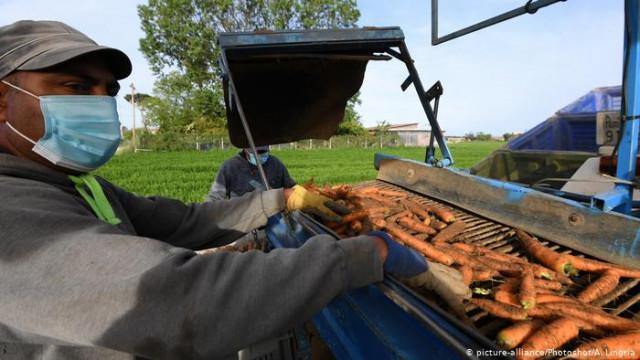 В ЕС хотят улучшить условия для сезонных работников