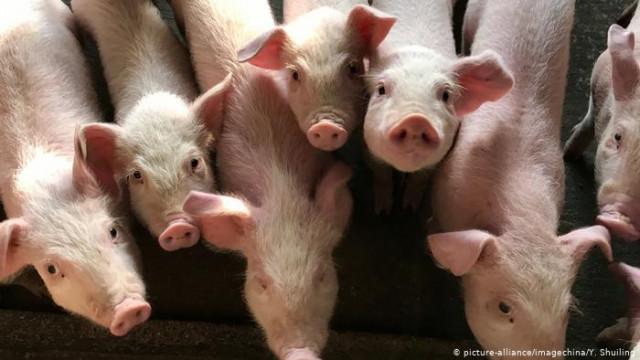"""Почему """"дешевого"""" мяса в Германии становится меньше (видео)"""