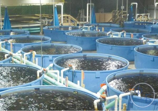 Разведение рыбы в бассейнах: особенности и оборудование