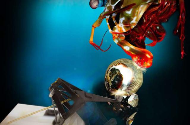 Робот имитирует мощный удар креветки-богомола